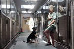 Animal Shelter Reopens