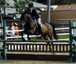 Local Equestrians in Jumping Contest