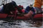 Unclear End to 'Epic' Rescue