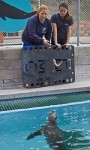 Volunteers Help Revive Marine Mammal Center