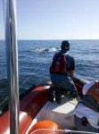 Whale Enmeshed by Debris Spotted Miles Away