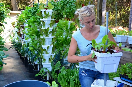 An Alegria Farms worker prepares hydroponic pots for seedlings in Laguna Canyon. Photo by Danielle Robbins