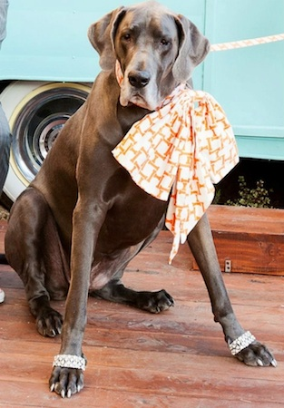 4 dog obit