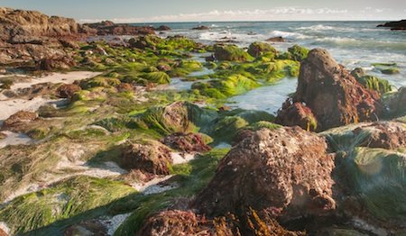 Photo by Ron Chilcote  Usually submerged sea grass and boulders revealed by last week's exceptionally low tide.