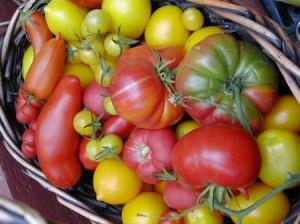1.2 community datebook Tomatomania-thumb-594xauto-24937