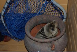 1 mammal Screen Shot 2013-02-12 at 1.51.17 PM