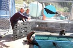 Volunteers Laura Dwyer (left) and Shannon Sapp toss a herring to a recovering sea lion pup.