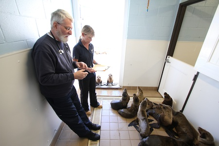 Dr. Richard Evans, PMMC veterinarian, and Michele Hunter, director of animal care, check an underweight but eager group of rescued sea lion pups in 2013. Photo by Edgar Obrand
