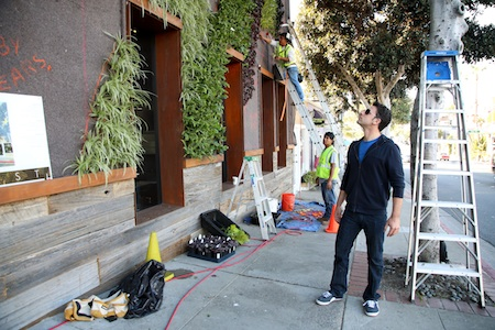 Sam Kapcio inspects the installation of Seven Four One's new living wall, an effort to revamp its image and consequently its place on the Laguna Beach landscape. Photo by Jody Tiongco