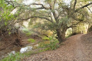 Put Me There:  Coyote Trail, suitable for personal R&R, reflection and relaxation.