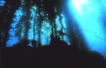 Eye on Nature: Undersea Forest Revives