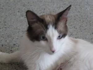 6 cat 016