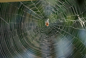 """Web"" by Sol Mcdermott"