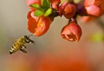 Eye on Nature: Bee Aware
