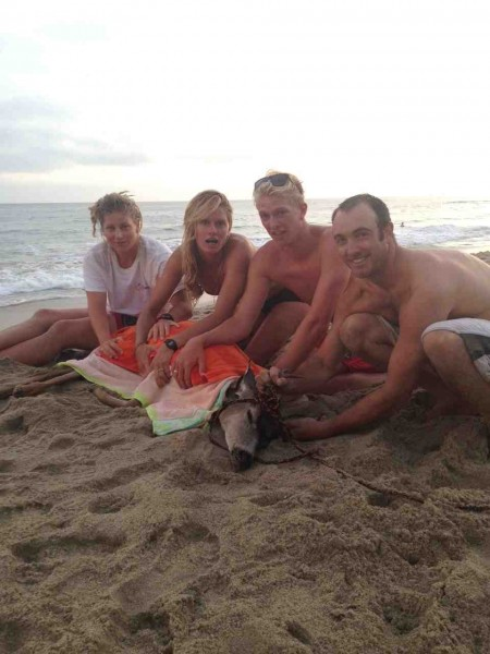 Lifeguards at Thousand Steps Beach made an unusual rescue on Sunday, July 14. Photo by Karly Combs