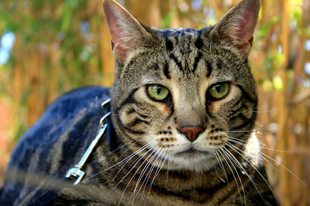 A cameo appearance by Aragon is expected at the realtors' Pet Parade.