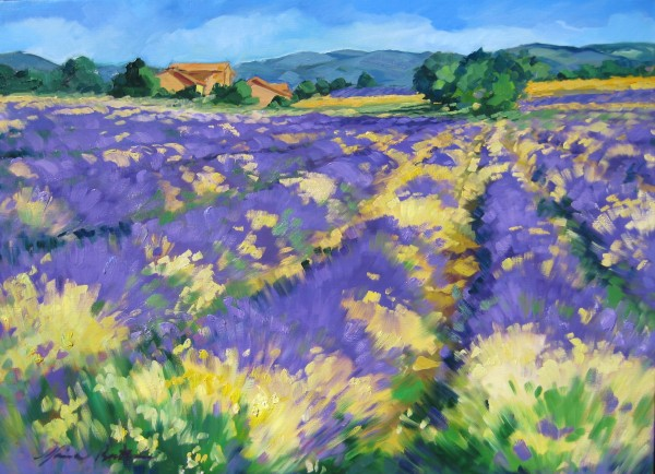 """Margueritas In Albion Lavender Field"" by Maria Bertran"