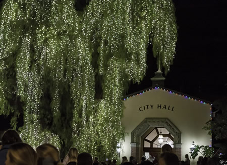 City Hall's stately pepper tree came alive,  lit by Santa Claus on Hospitality Night.