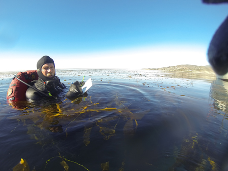Biologist Mike Curtis measuring kelp plants per acre off Cleo Street in Laguna Beach last week.