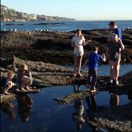 Low tide allows visitors to appreciate the living jewels in  Laguna's tide pools.