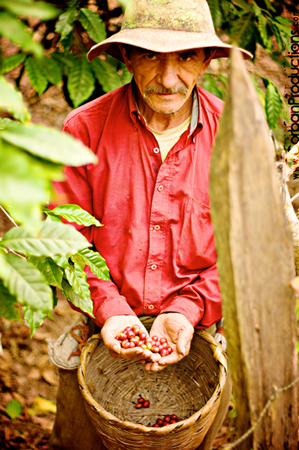 A Grower's First Coffee Farmer
