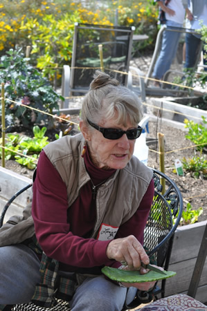 Loraine Hollingsworth demonstrates cutting cactus in the South Laguna Community Garden.