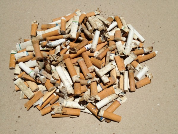 Cigarette butts collected in canyon.
