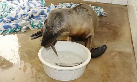 Davy  eating fish.