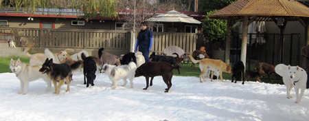 Dogs in training for the Iditarod? Not likely, but fun for Vicky Roque and the four-footed anyway.