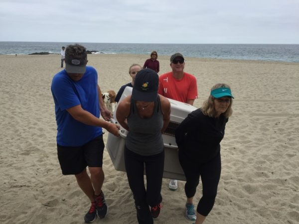 Beach-goers assist in a marine mammal rescue at West Street Beach Saturday, May 14.