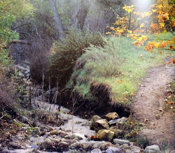 A dry Laguna Canyon Creek filled with rocks and sand runs through Laurel Canyon in Laguna Coast Wilderness Park. Photo By: Ron Chilcote