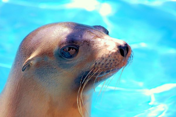 Sketch a sea lion during art workshops. Photo by LOCA.
