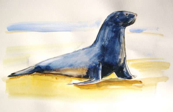 Sketch a sea lion in watercolor at workshop with Mike Tauber.