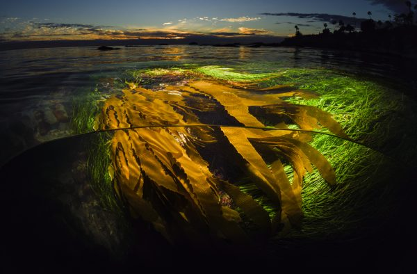 Sean Hunter Brown's Tickle a Kelp won third prize in Professional category.