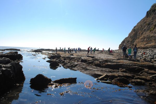 Rocky intertidal areas popular with beach goers cover a quarter of marine protected zones in Southern California. Photos by Sarah Finstad.