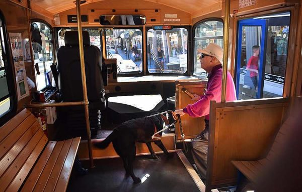 Jerry Lowenter, a 39-year resident, and his guide dog ride the trolley three to four times a week along Park Avenue towards the village.  Photo by Marilynn Young.