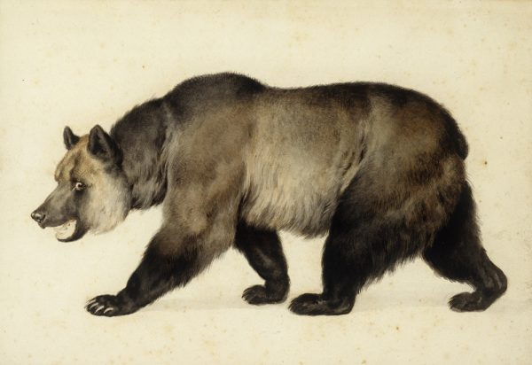 "Charles Christian Nahl's ""Grizzly Bear,"" 1854. On loan from the city of Monterey art collection."