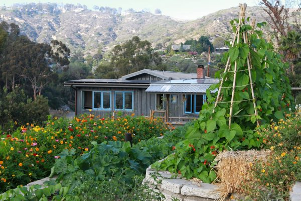 Produce growing on the terraces of Bluebird Farm.