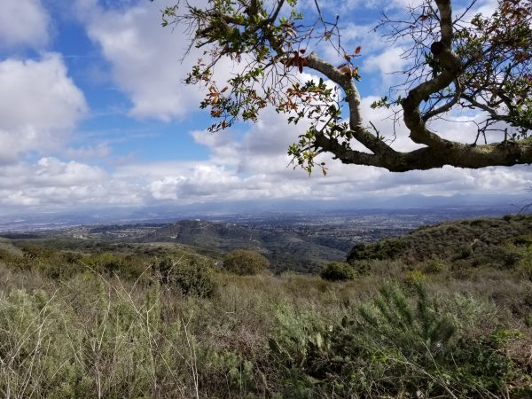 A view of the preserved land from Top of the World in the Laguna Beach greenbelt. Photo by Charles Michael Murray.