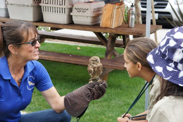 Campers get an up-close look at birds of prey during their stay at The Ranch.
