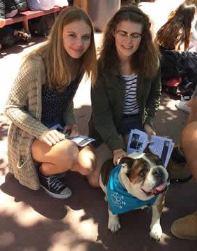Students de-stress on campus with adoring dogs.
