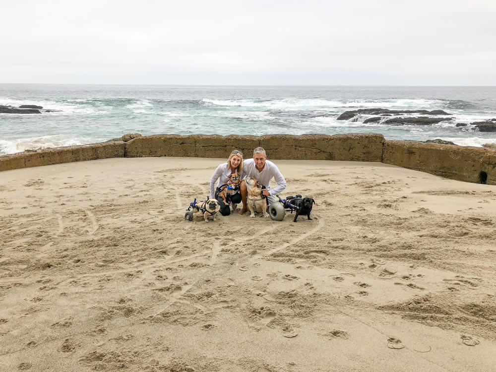 (From left) Rescue dogs Stanlee, Trey, Herve and Levi pose with their owners Amy and Julian Mack, of Laguna Beach. The Macks are proposing to build a senior and special dogs adoption center on Laguna Canyon Road. Photo courtesy of Amy Mack